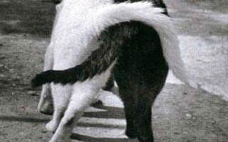 gatos-amigos