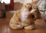 8851-Curious-Cat